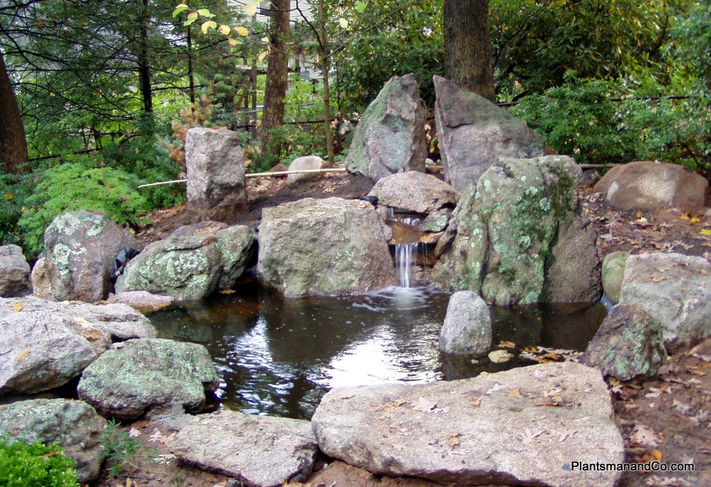 Water features plantsman co for Home ponds and waterfalls